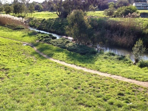 Merri Creek view